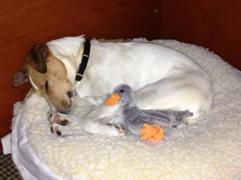 Arcadia snuggling with her duck